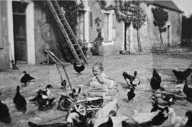 Dans la cour de ferme du Boulay au milieu de la basse-cour (à Dorceau dans l'Orne)
