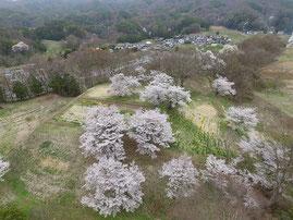 【推薦】小平充宏「桜の福与城址」