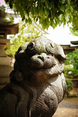 諏訪神社の守護獣・獅子のように勇ましく、たくましく、Fightね!