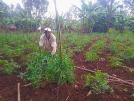 Pomodori in vista per i nostri ragazzi di Mwanda