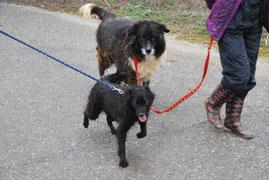 Anja und Lucy beim Spaziergang