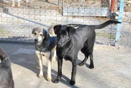 Deana mit ihrem Bruder Geno (vermittelt)
