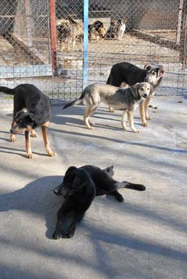 Geno mit seinen Geschwistern: Deso (hinten), Iskra (links) und Deana (vorne)
