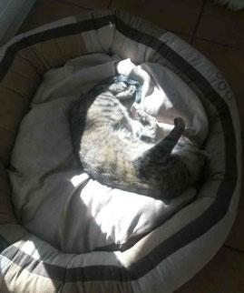 Minu nimmt ein Sonnenbad im Hundekörbchen