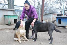 Hunde mit Handicap - Maltscho, Marvin, Schischo