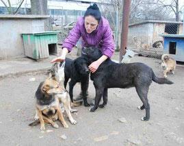 von links: Masha, Maltscho, Marvin und Schischo