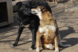 Wahre Hundeliebe: Schischo und sein Freund Maltscho