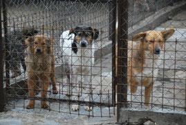 Ida, Erika und Felice sind traurig hinter dem Tierheimzaun