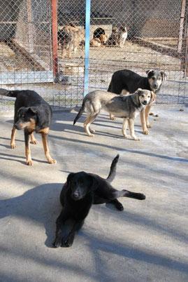 Deana, dahinter Iskra (links), Geno und Deso (hinten)
