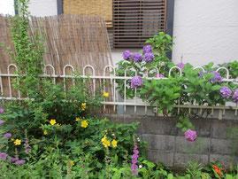 ⑧黄色、紫、緑の葉たちも加わって夏花コラボレーション*