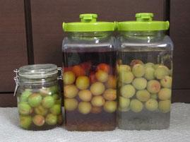 ⑯いっしょに作った梅の実はちみつ漬け瓶を加えて3パターン*梅の実トリオになりました。さあ、ゆったり時間をかけておいしい梅の実3兄弟になってね。