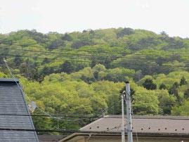 住まいから見える里山の蕃山。若草色に染まる春が過ぎ…