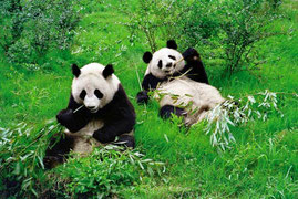Brosse à dents en bambou the Green Smile