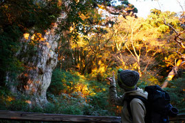 お天気に恵まれれば、朝焼けの縄文杉に出会える⁉(屋久島縦走ガイドツアー)