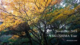 11月の屋久島ツアーご予約状況