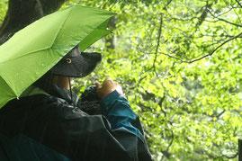 雨の森に光が差す瞬間(縄文杉1泊ガイドツアー)