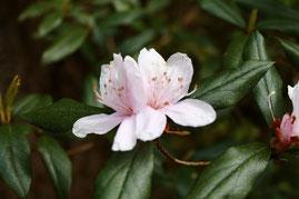 屋久島,お花見,登山,トレッキング