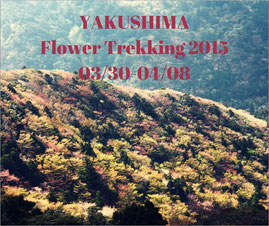 屋久島,白谷雲水峡,もののけの森,もののけ姫,ガイド,ツアー,山桜,太鼓岩