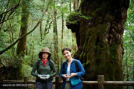 ヤクスギランドにある仏陀杉(太忠岳ガイドツアーにて)