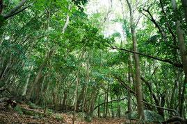 一年中緑に覆われた、照葉樹林の森(西部林道ガイドツアー)