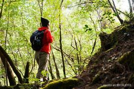 ヤクスギランド,朝の光,屋久島,ガイドツアー,半日過ごし方,屋久杉,トレッキング