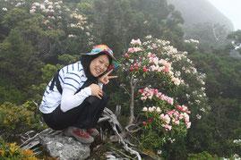 満開のシャクナゲ(黒味岳ガイドツアーにて)