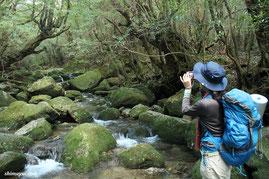 屋久島,宮之浦岳縦走,女性一人旅,もののけの森