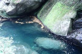 清流,屋久島,一人旅,滝,白谷雲水峡