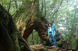 白谷雲水峡・くぐり杉(縄文杉1泊ガイドツアー)