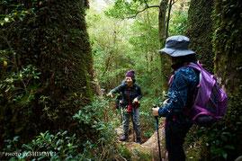 登山道には数々の巨木(太忠岳ガイドツアー)