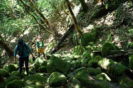 屋久島らしい苔の美しい森