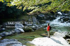 ヤクスギランド,天文の森,釈迦杉,おすすめガイドツアー,人気エコツアー,屋久島半日