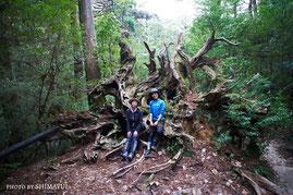 ヤクスギランド,蛇紋杉,屋久島,ガイドツアー,半日過ごし方,屋久杉,トレッキング