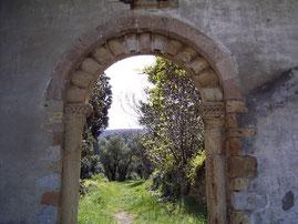 Foto: Autorin Gabrielle C. J. Couillez - Olivengarten in Fenouillet