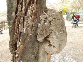 桜樹がゾウさんのような形! 桐生が岡動物園 あおい夢工房 炎と楽園のアート
