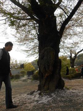 葉桜と桐生が岡動物園 あおい夢工房 炎と楽園のアート Mukyokobayashi 小林夢狂
