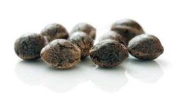 acheter graines de cannabis medical