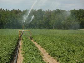 Agriculteurs irrigants, calculez les besoins en eau des vos cultures avec Agralis