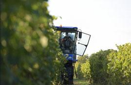 Travail des vignes Rousteau bio