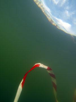 Serpent de mer #5, dim. 30cmx40cm, 2017