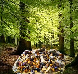 Es lohnt sich, den Wald zu beschützen!