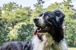 basiscursussen hond