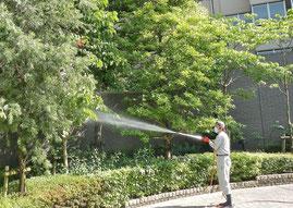 植木の殺菌剤散布