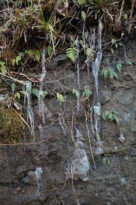 崖にできた氷柱