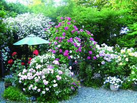 ※春のお庭イメージ