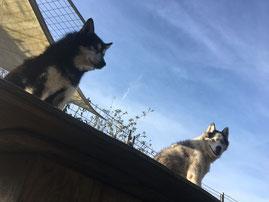 Sie schauen über ihr Reich, Merkur und Yukon.
