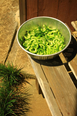 癌(ガン)に効く野菜とされるゴーヤは乾燥させてから食べると栄養価が高い