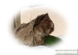 Arielle vom Sommerbach