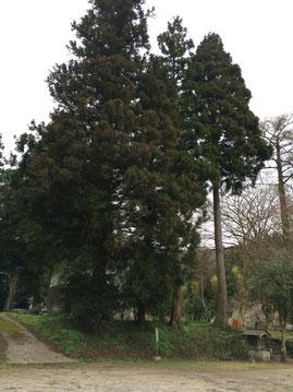 伐採する樹木4本