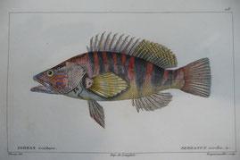 Serran écriture, dessin de Werner, gravé par F.-J. Dequevauviller © Archives et bibliothèque patrimoniale d'Abbeville
